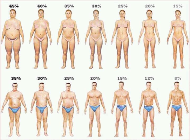 perdida de grasa abdominal